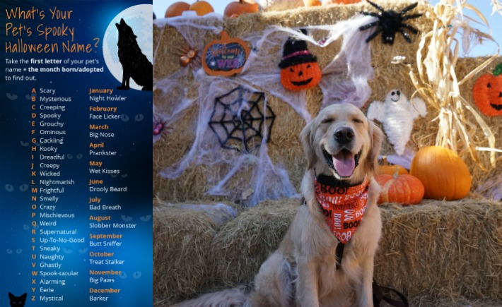 Healthy Paws Pet Insurance Reviews >> What's Your Pet Spooky Halloween Name? - Golden Woofs