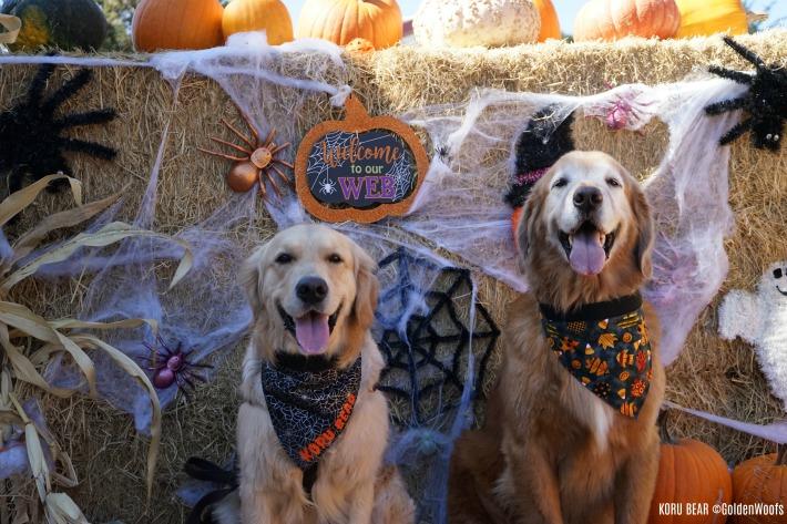 dogs in bandanas Halloween