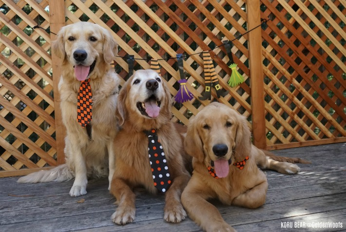 dogs in ties -- Halloween Dogs