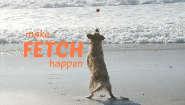 Celebrate National Fetch Day! Make Fetch Happen with Chuckit!