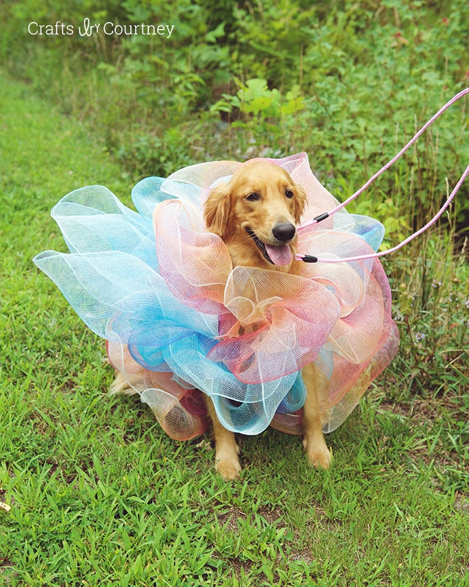 DIY Luffa Dog Costume