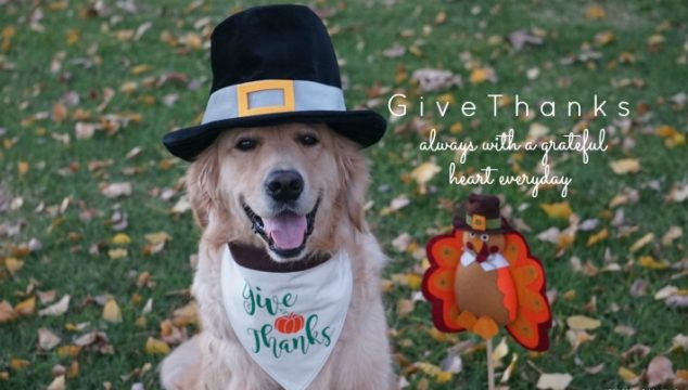 Give Thanks Thanksgiving Dog