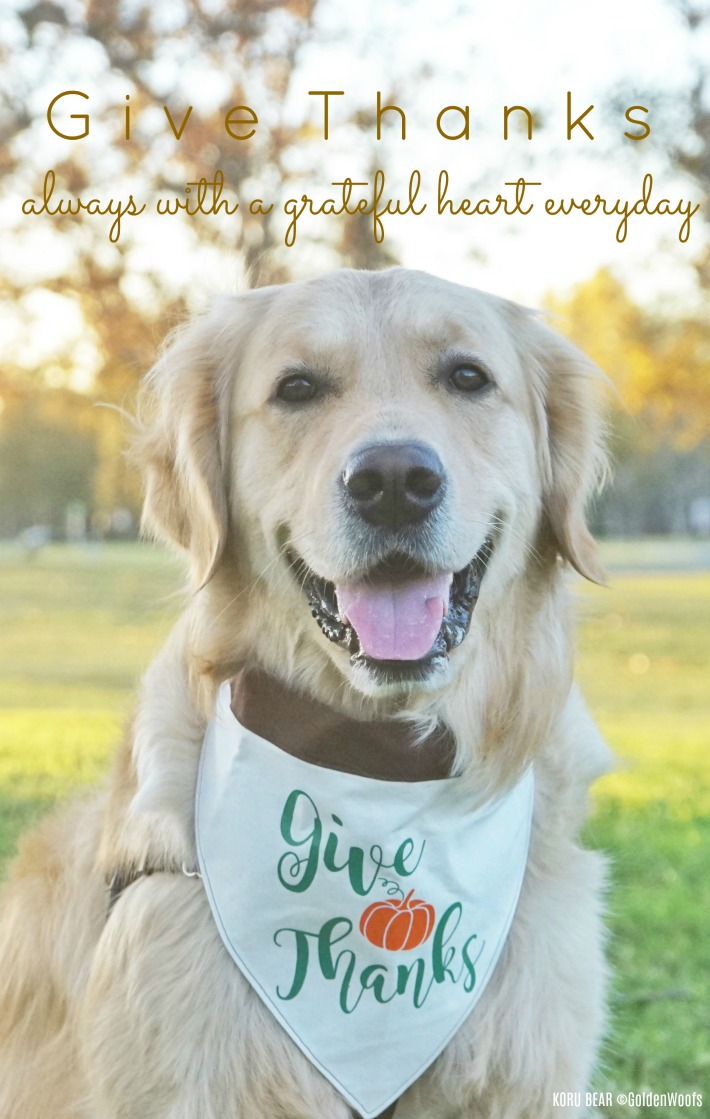 Give Thanks always with a grateful heart everyday - Thanksgiving Dog