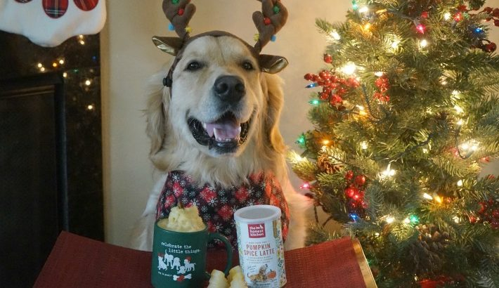 Pumpkin Spice Latte for Dogs #ChewyInfluencer