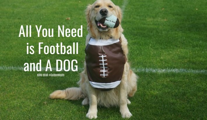Football and A DOG