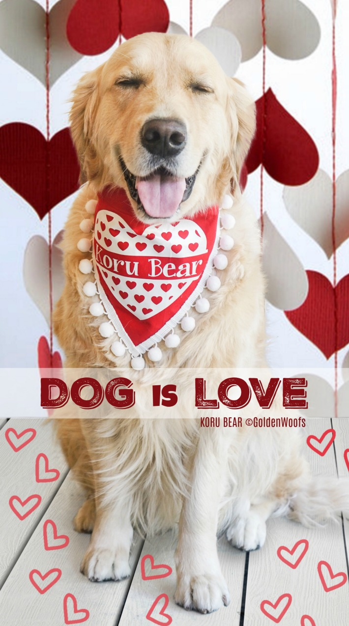 Dog Is Love - All you need is Love and A Dog