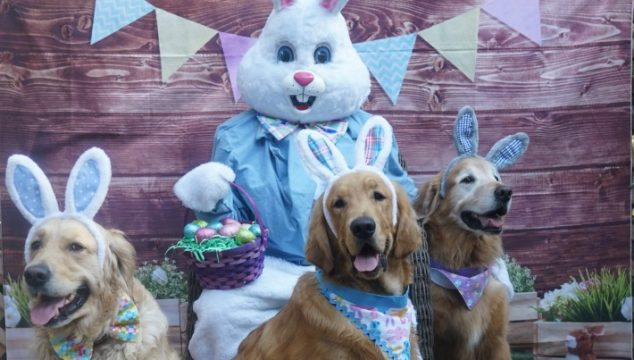Easter dog bunnies with the Easter Bunny