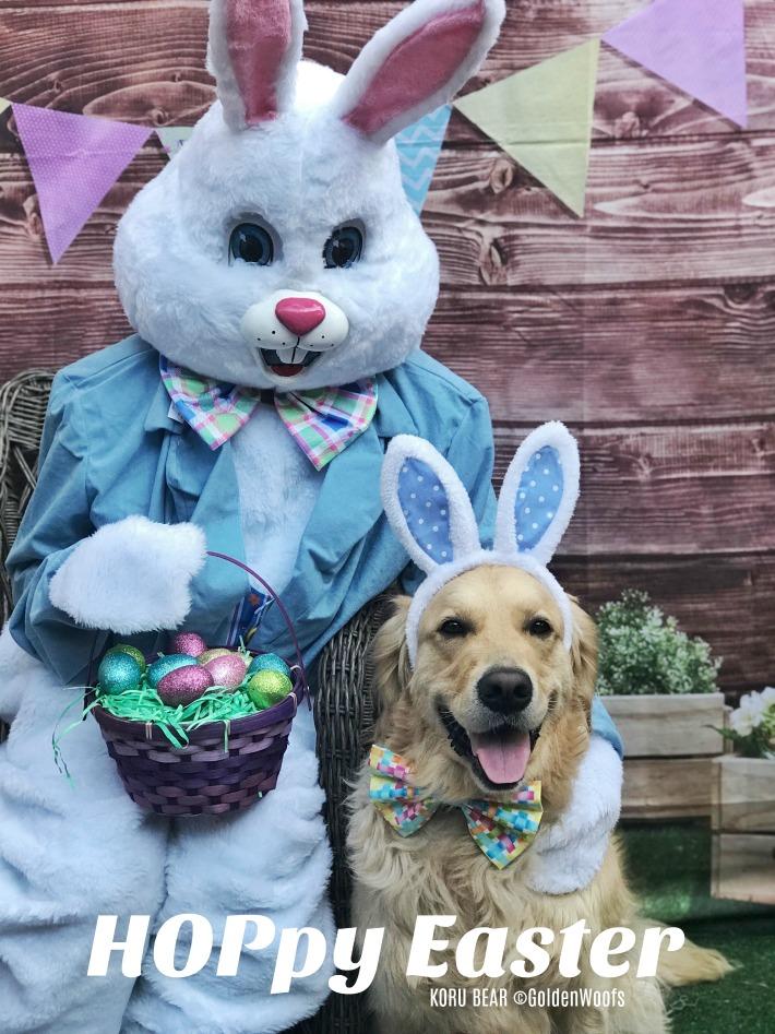 Easter Dog Bunny Hoppy Easter