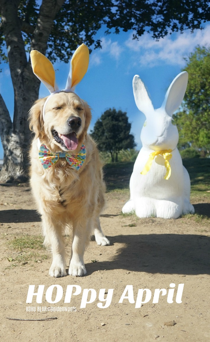 Bunny Dog HOPpy April