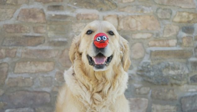 Red Nose Day - red nose dog