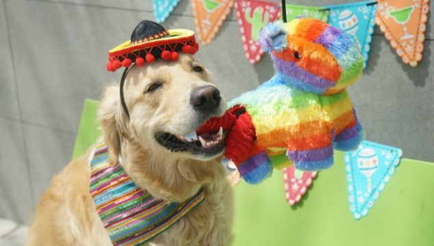 Zippy Paws Pinata Fiesta Dog Party
