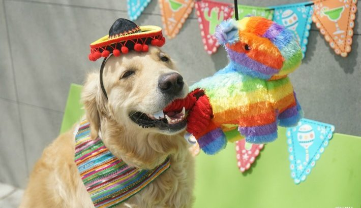 Lets Pawty! 5 Tips When Planning a Fiesta Dog Party