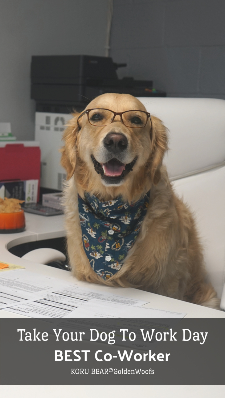 take your dog to work