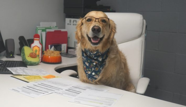 Take Your Dog To Work | Dog-Friendly Companies