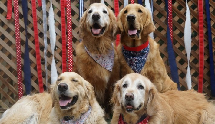 Patriotic Dogs | Happy Fourth of July