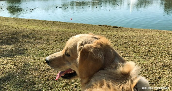 Watch Out for Stagnant Water and Protect Your Dog From Leptospirosis