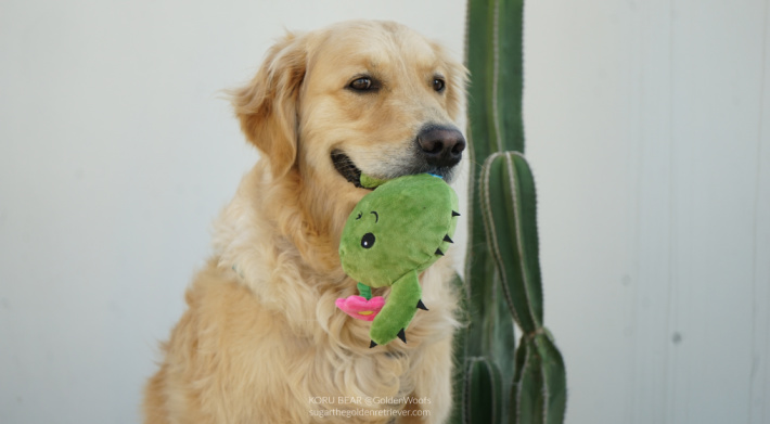 BARK toy Consuela the Cactus