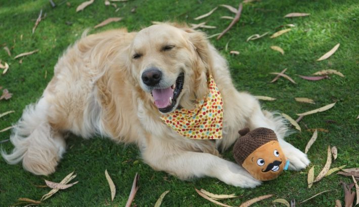 8 Factors on Choosing Dog Toys for your Dog