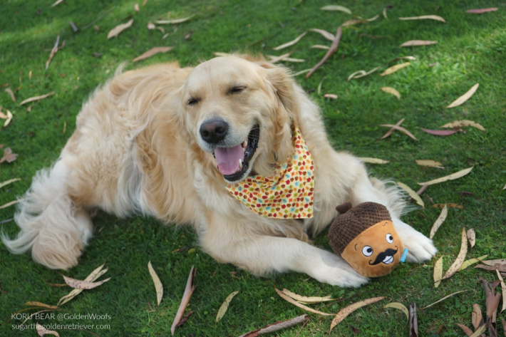 BARK toy Monsieur Acorn