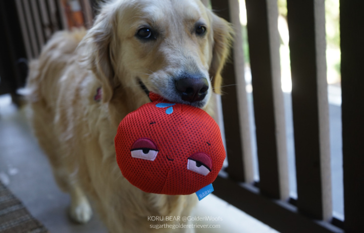 Choosing Dog Toys for your Dog