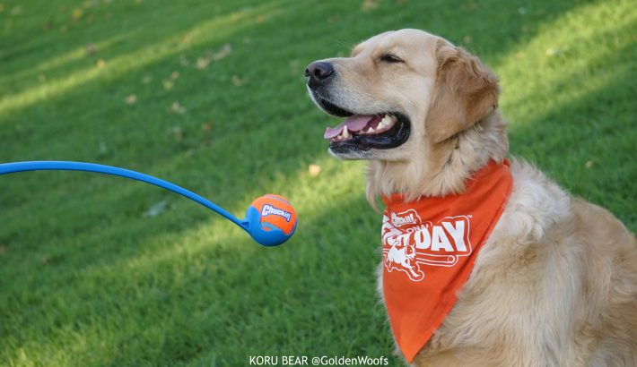 Make Fetch Happen with Your Dog – National Fetch Day