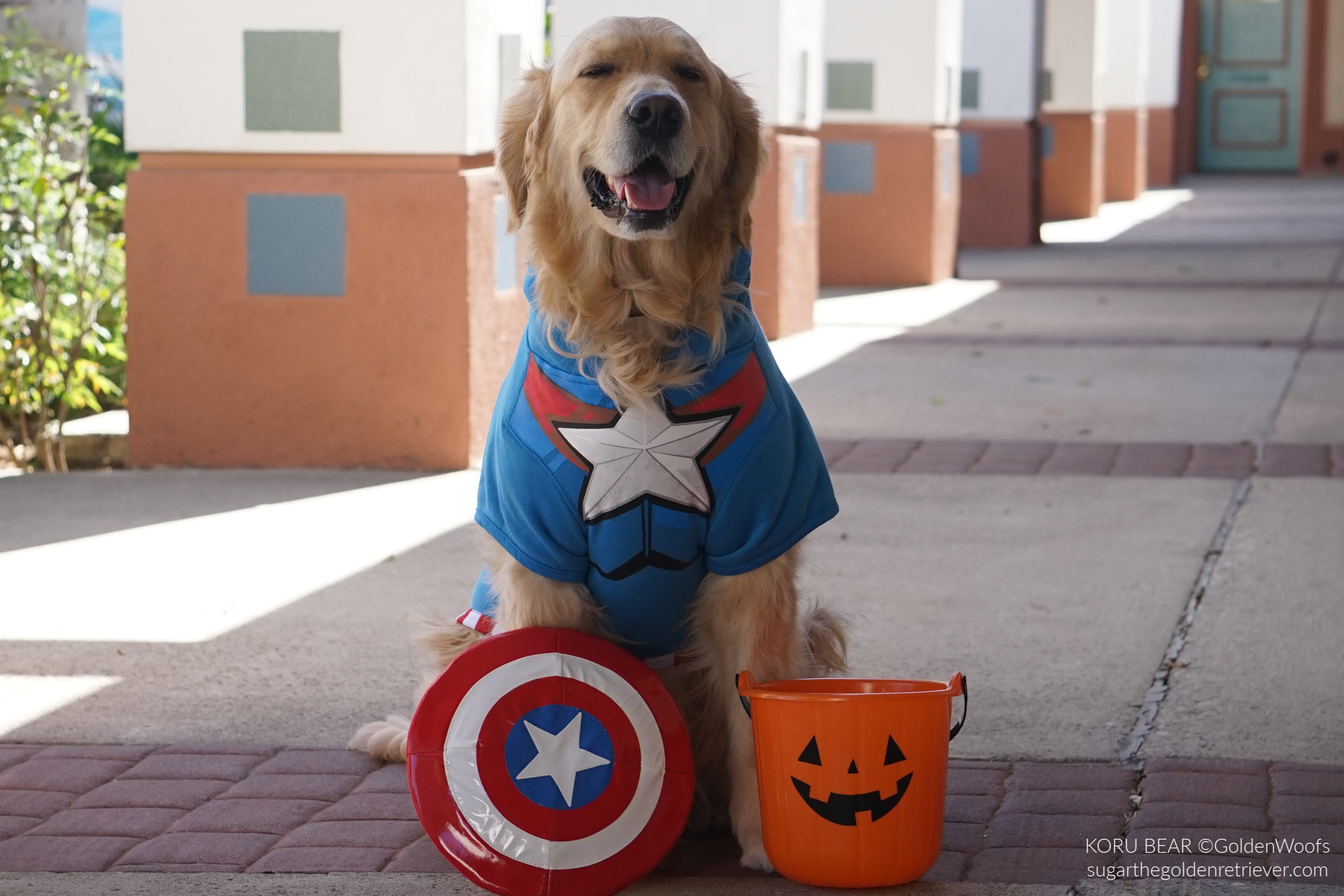 Captain America Dog Costume from Petco
