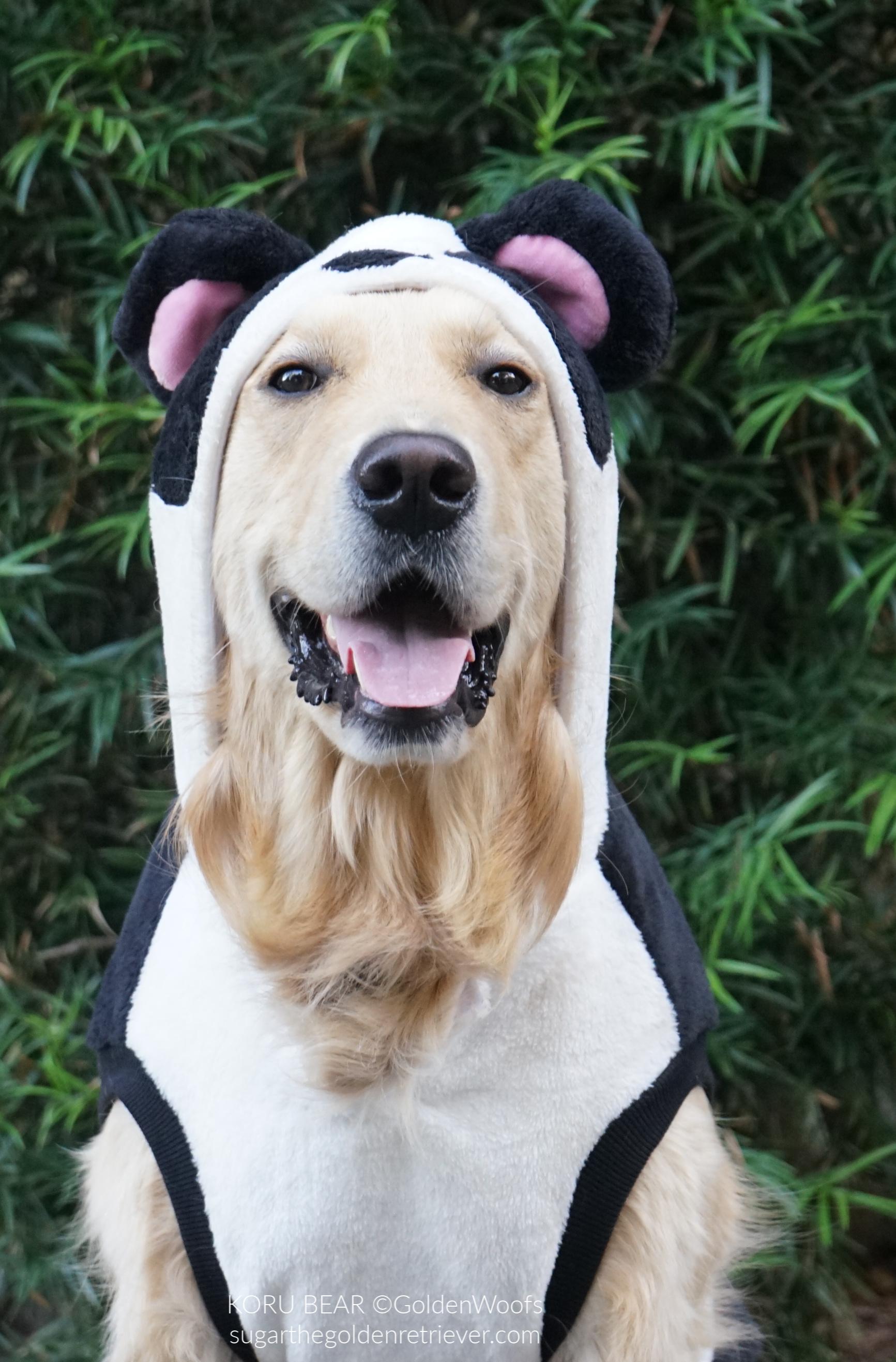 panda dog costume