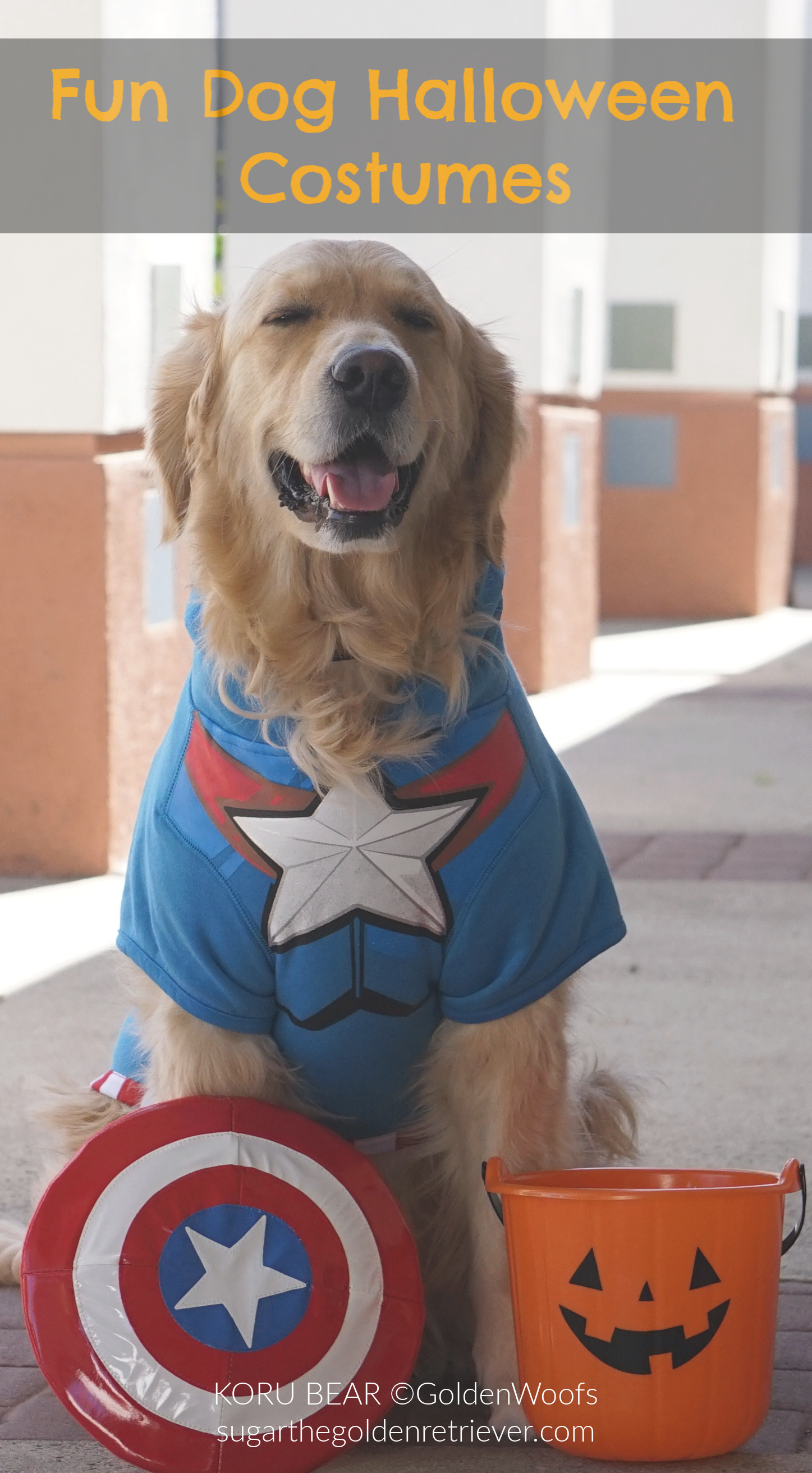 dog costume Superhero