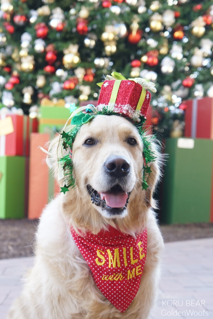 Holiday Smile - Smile With Me