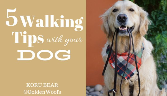 Walking Tips with your Dog Infographic