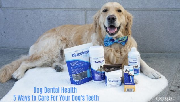 bluestem dog dental health products