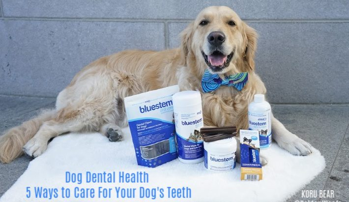 Dog Dental Health – 5 Ways to Care For Your Dog's Teeth