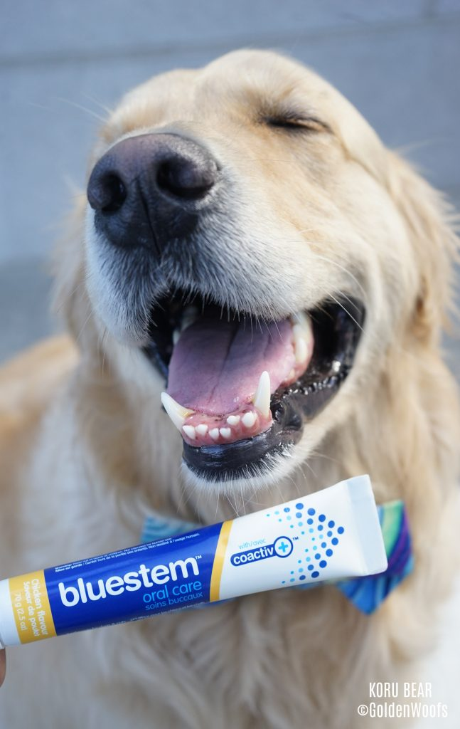 bluestem dog toothpaste dog dental health
