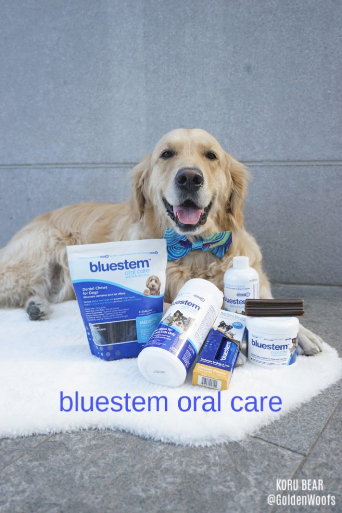 Dog Dental Health with bluestem oral pet care