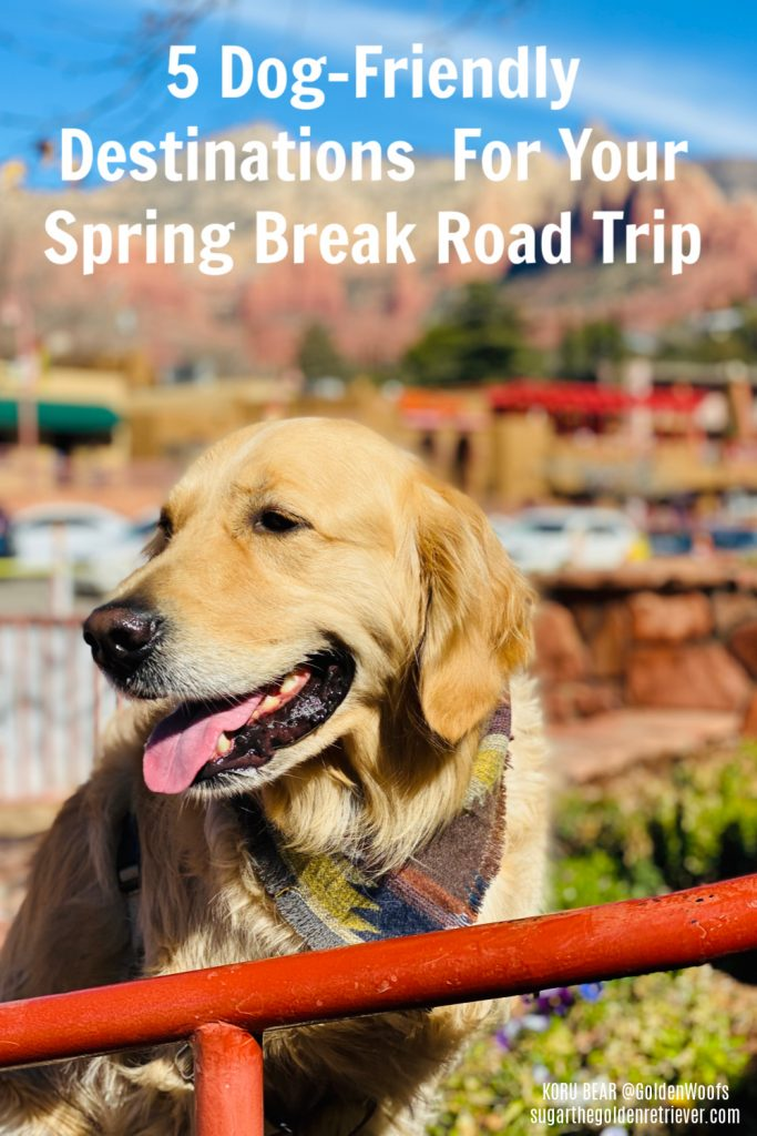 Spring Break Dog-Friendly Destinations Autotrader