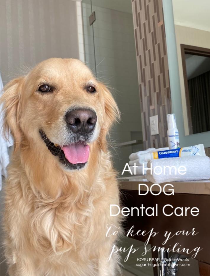 at home dog dental care dog smiling