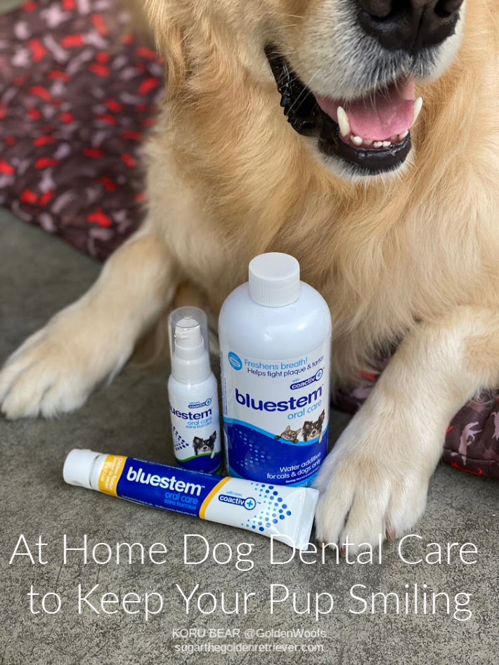 bluestem at home dog dental care
