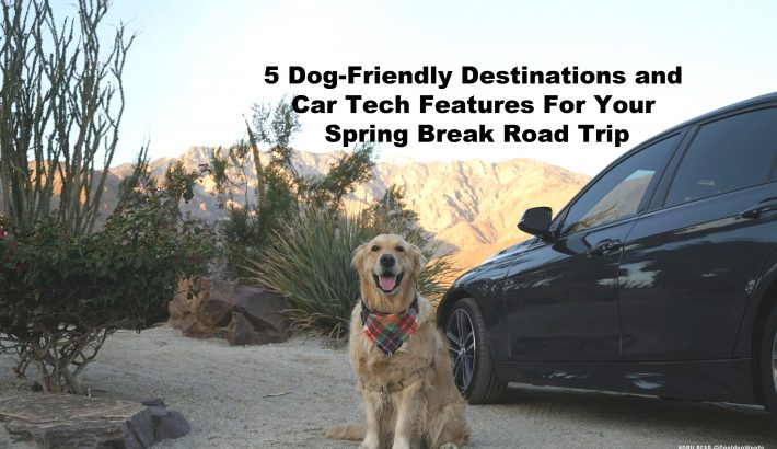 5 Dog-Friendly Destinations and Car Tech Features For Your Spring Break Road Trip