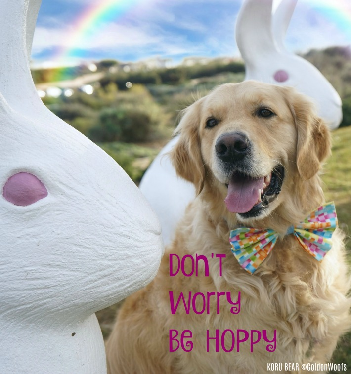 Bunny's Motto! Son't Worry Be Hoppy