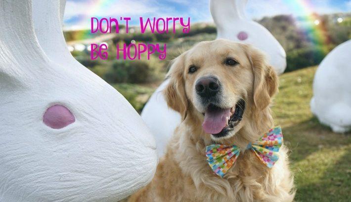 Bunny's Motto