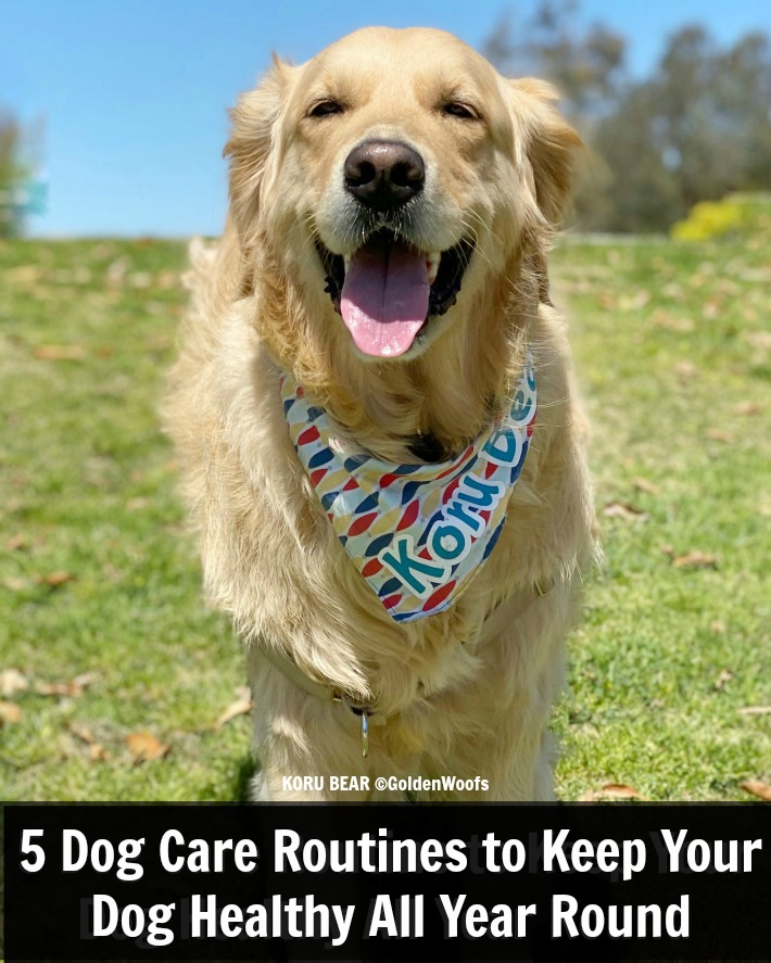 Dog Care Routines featuring bluestem oral care products