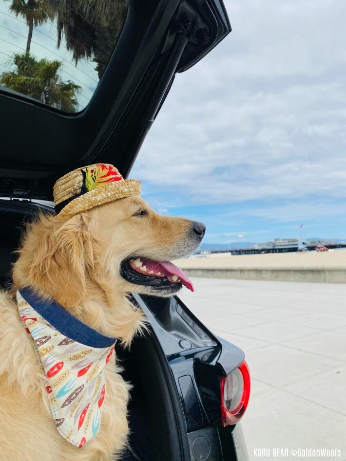 Dog Friendly Santa Barbara Stearns Wharf