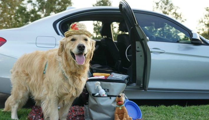 Dog Travel Car Essentials for a Safe and Happy Trip