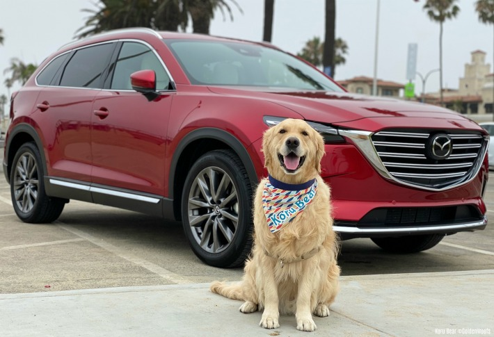 Dog Friendly Travel Car Rides with Mazda