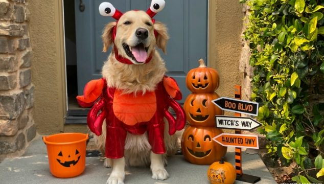 2020 cutest dog halloween costumes from target