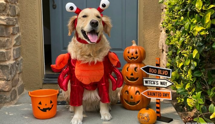 2020 Cutest Dog Halloween Costumes |  5 Tips for Choosing the Right Costume For Your Dog