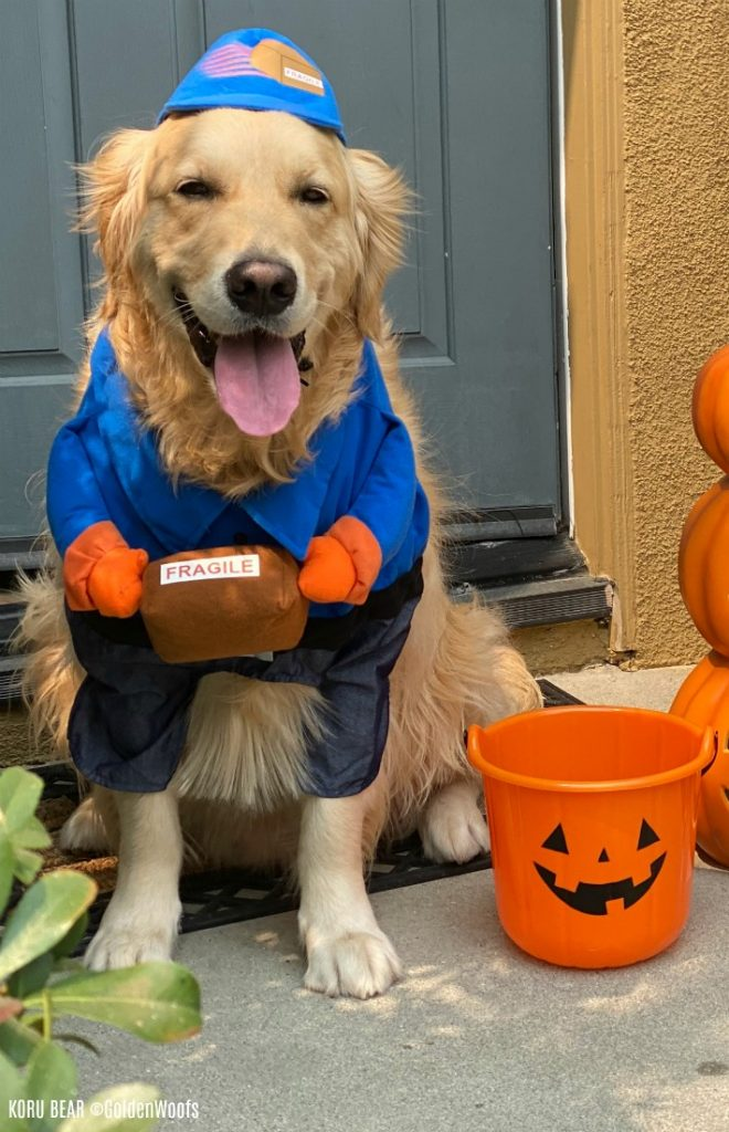 box delivery dog halloween costume