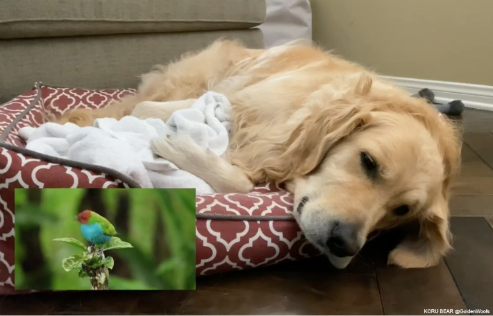Nature Sounds Can Help Your Dog Sleep
