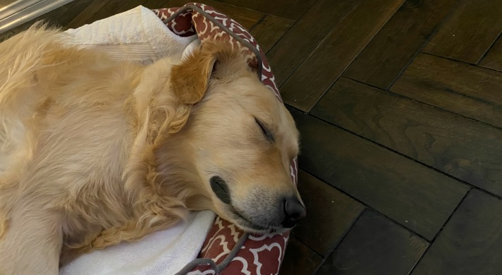 How Soothing Nature Sounds Can Help Your Dog Sleep