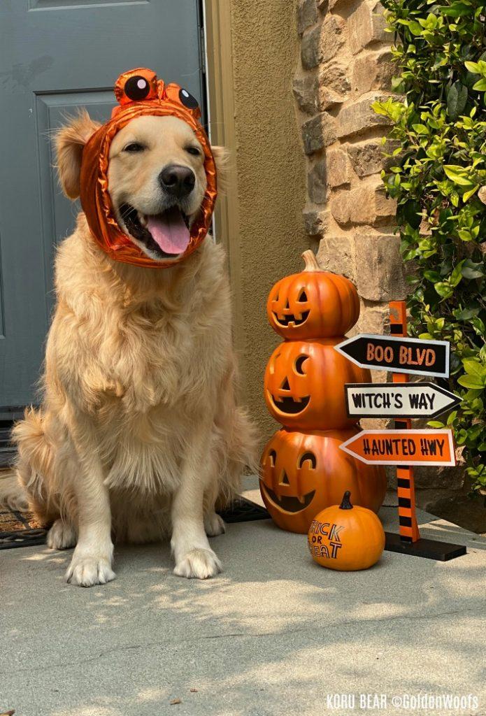 disfraz de halloween para perro pez dorado